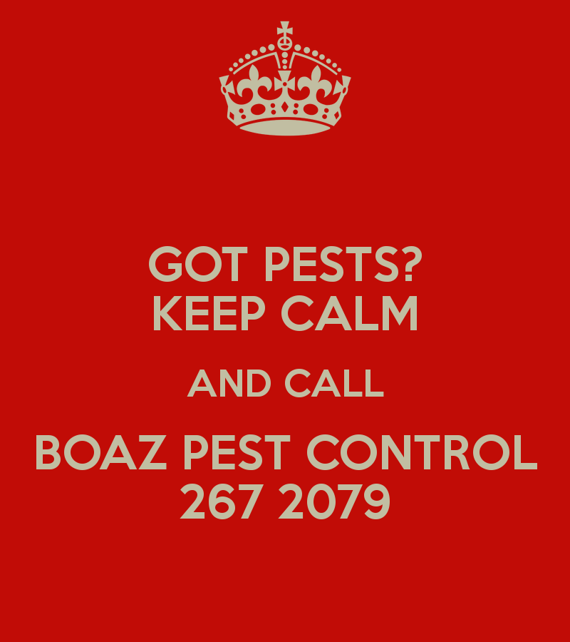 Got pests? Keep calm and call Boaz Pest Control at 267 2079.